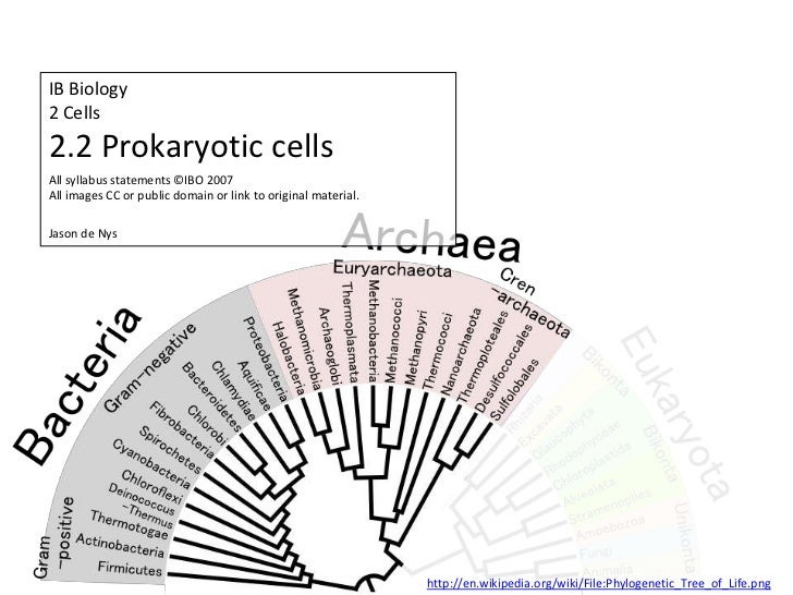 IB Biology Core 2.2: Prokaryotic Cells