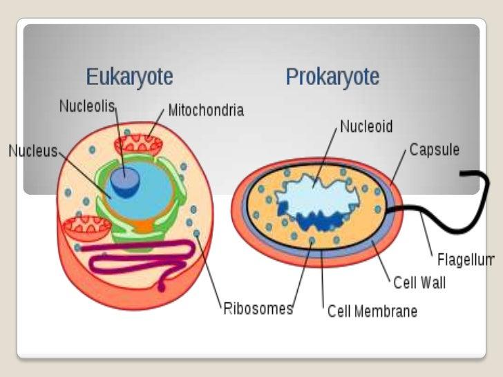Eukaryotic VersusProkaryotic Cells