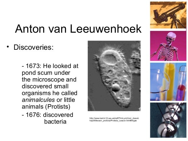 Image result for antonie van leeuwenhoek cell theory contribution