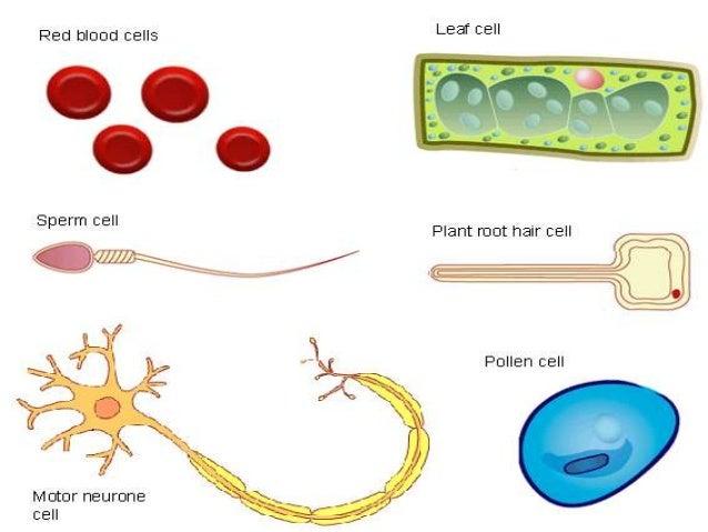 types of plant cells pdf