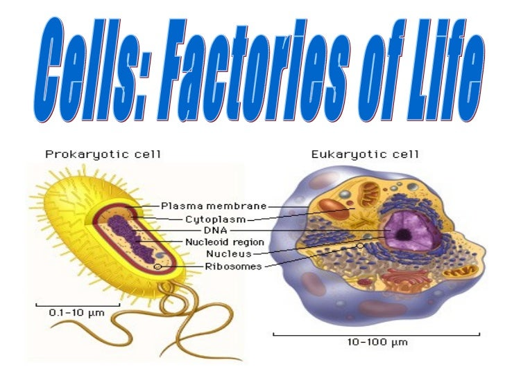 Cells: Factories of Life