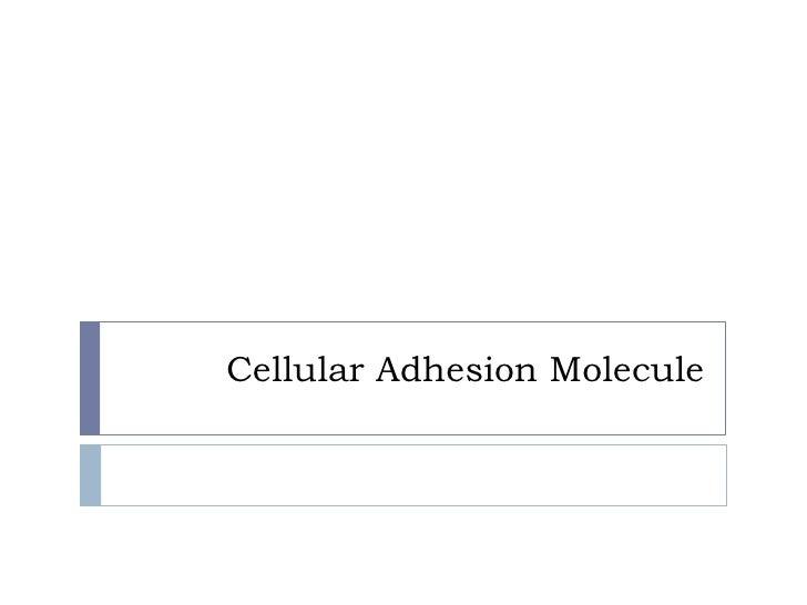 Cellular Adhesion Molecules
