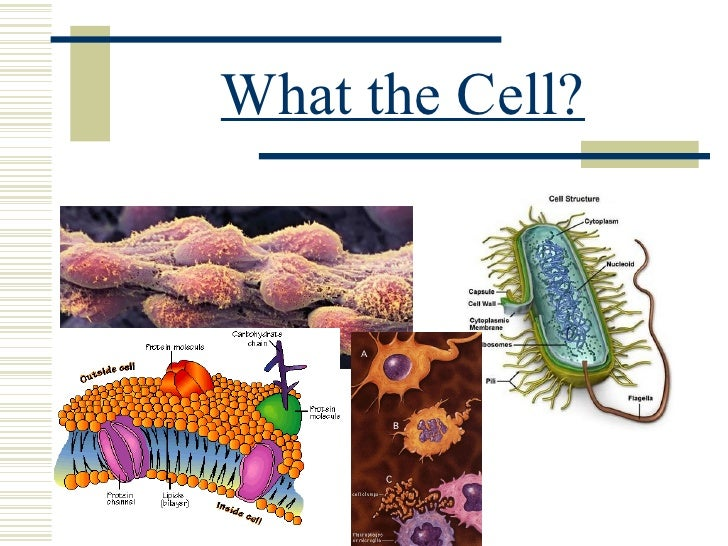 What the Cell?