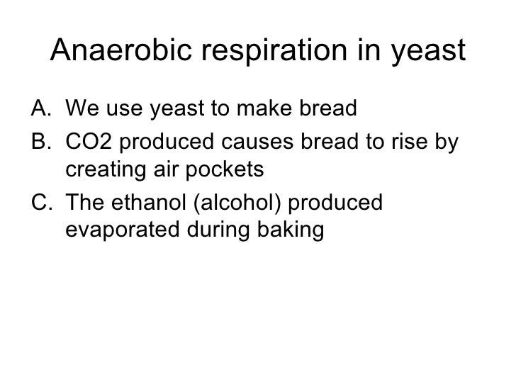 rate of respiration of yeast The aim of this investigation is to examine what effects different substrates have on the respiration of yeast i will investigate this by.