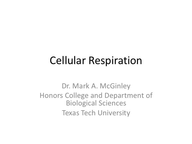 Cellular Respiration      Dr. Mark A. McGinleyHonors College and Department of       Biological Sciences      Texas Tech U...