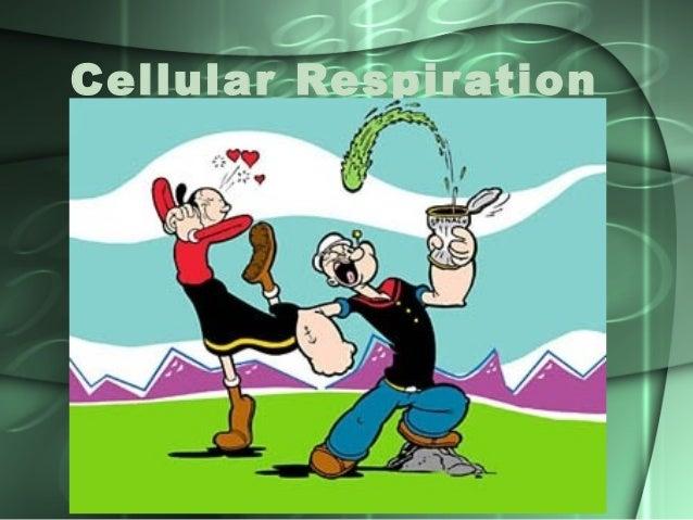 Cellular Respir ation