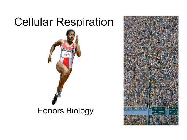Honors ~ Cellular respiration 1213