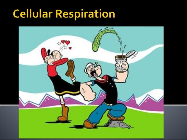 cellular respiration 2012 end of school clip art border end of school day clipart