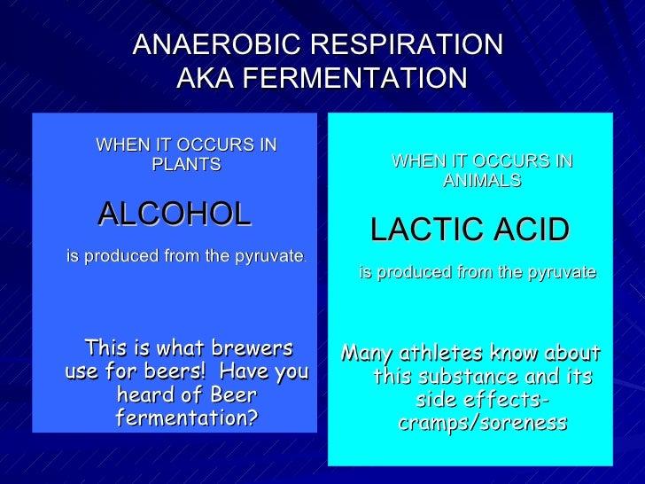Aerobic Vs Anaerobic Respiration Diagram Lactic Acid ...