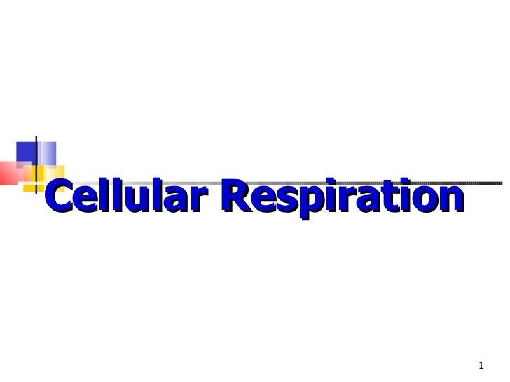 Cellular respiration ppt wit turning pt qs