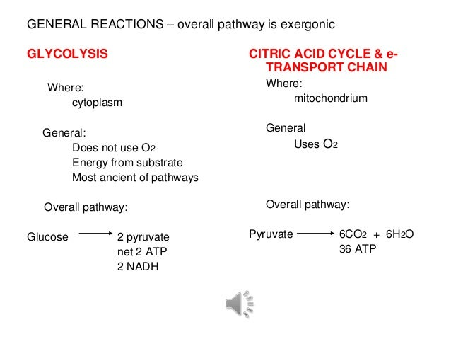 GENERAL REACTIONS – overall pathway is exergonicGLYCOLYSIS                        CITRIC ACID CYCLE & e-                  ...