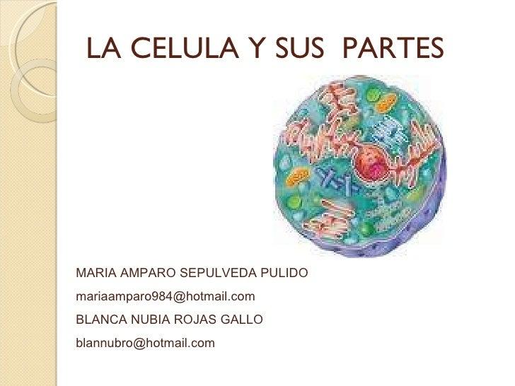 LA CELULA Y SUS  PARTES MARIA AMPARO SEPULVEDA PULIDO [email_address] BLANCA NUBIA ROJAS GALLO [email_address]