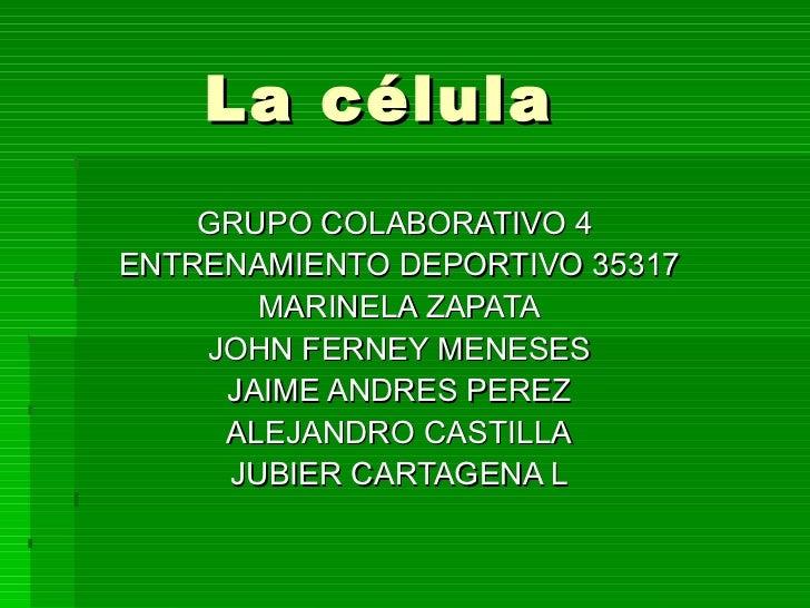 La célula GRUPO COLABORATIVO 4  ENTRENAMIENTO DEPORTIVO 35317 MARINELA ZAPATA JOHN FERNEY MENESES JAIME ANDRES PEREZ ALEJA...