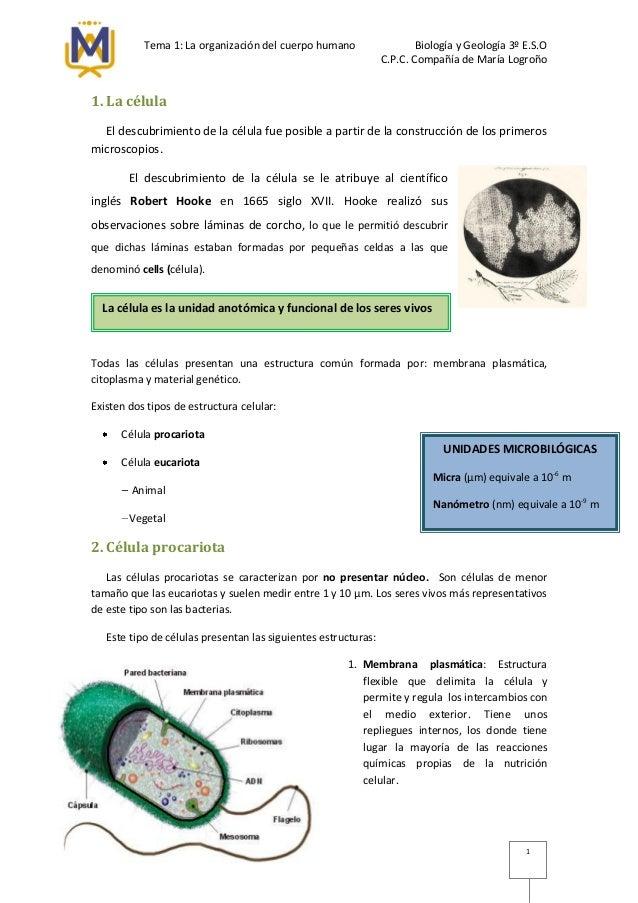 Tema 1: La organización del cuerpo humano Biología y Geología 3º E.S.O C.P.C. Compañía de María Logroño 1 1. La célula El ...