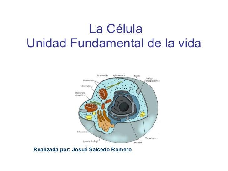 La Célula Unidad Fundamental de la vida  Realizada por: Josué Salcedo Romero