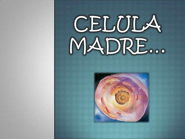 CELULA MADRE…<br />