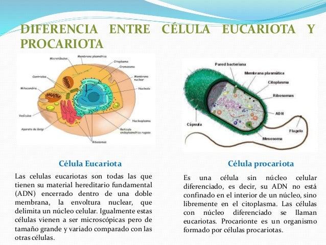 celula procariota caracteristicas yahoo dating