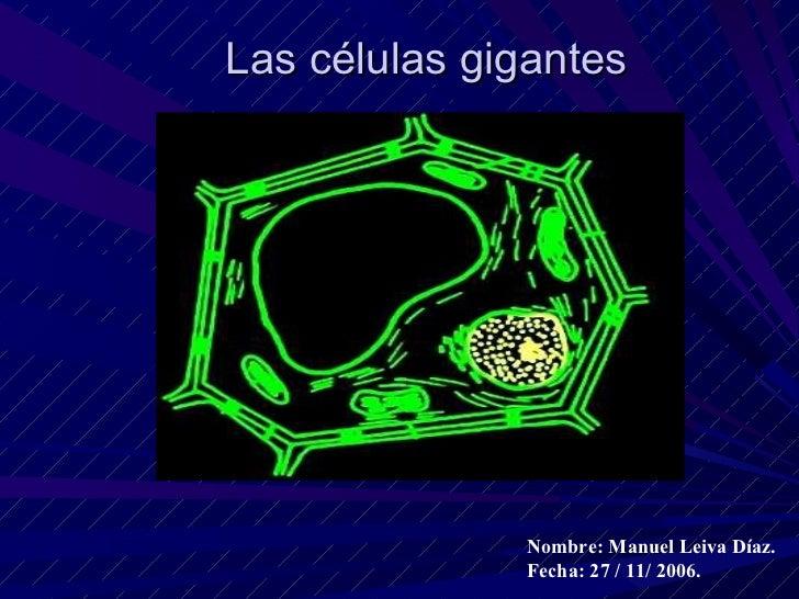 Las células gigantes                   Nombre: Manuel Leiva Díaz.               Fecha: 27 / 11/ 2006.