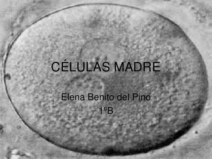 CÉLULAS MADRE<br />Elena Benito del Pino<br />1ºB<br />