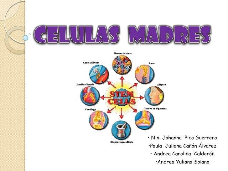 Celulas Madres Informacion Related Keywords - Celulas