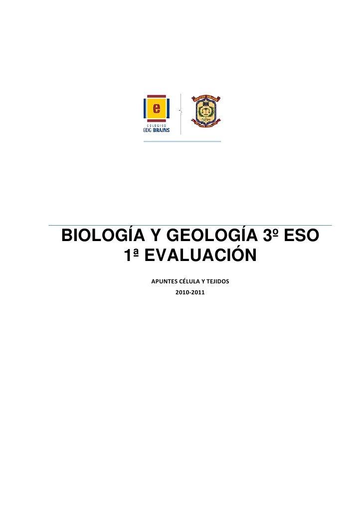 BIOLOGÍA Y GEOLOGÍA 3º ESO       1ª EVALUACIÓN          APUNTES CÉLULA Y TEJIDOS                 2010-2011