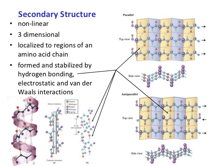 Secondary Structure <ul><li>non-linear </li></ul><ul><li>3 dimensional </li></ul><ul><li>localized to regions of an amino ...