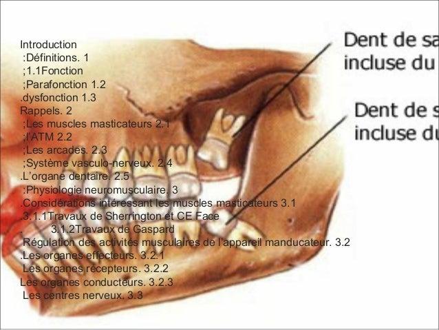 Introduction 1.Définitions: 1.1Fonction; 1.2Parafonction; 1.3dysfonction. 2.Rappels 2.1Les muscles masticateurs; 2.2l'ATM;...