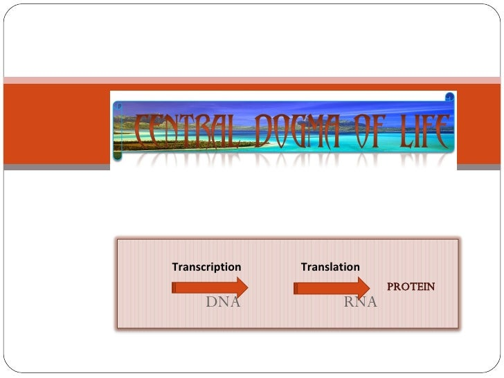 PROTEIN Transcription  Translation  DNA  RNA