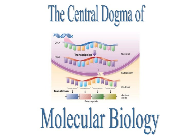 Central Dogma and Protein Synthesis