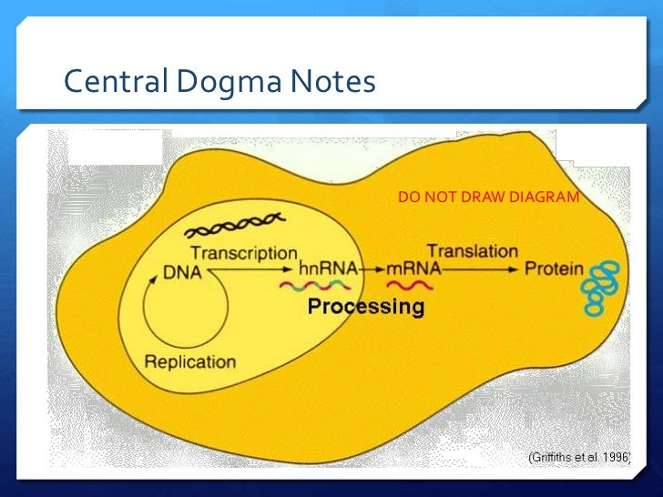 transcription section of the central dogma The lesson-planning document that i uploaded to this section is a  transcription & translation: formative assessment  the central dogma (#4 of 6): transcription.