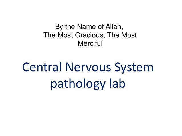 the mammalian urogenital lab questions The digestive and urogenital systems the abdominal cavity in this lab mammalian digestive system the digestive tract starts with the mouth and its.