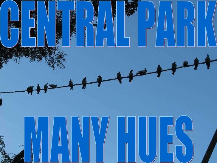 CENTRAL PARK MANY HUES