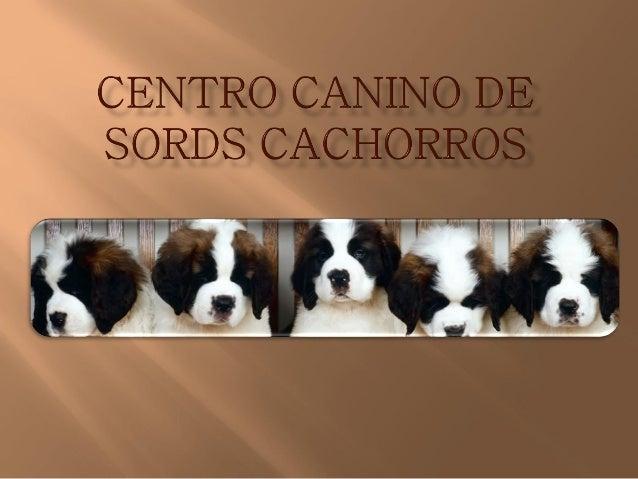 Centro canino de sords razas cachorros