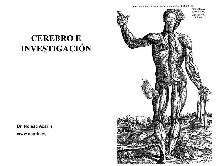 CEREBRO E  INVESTIGACIÓN     Dr. Nolasc Acarín www.acarin.es