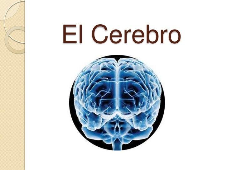 Cerebroo