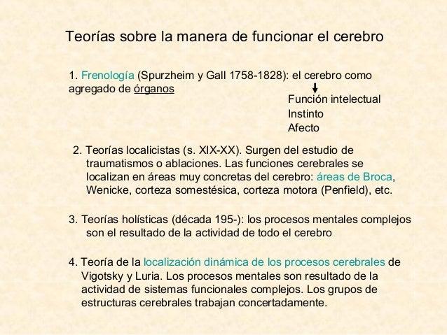 Teorías sobre la manera de funcionar el cerebro 1. Frenología (Spurzheim y Gall 1758-1828): el cerebro como agregado de ór...