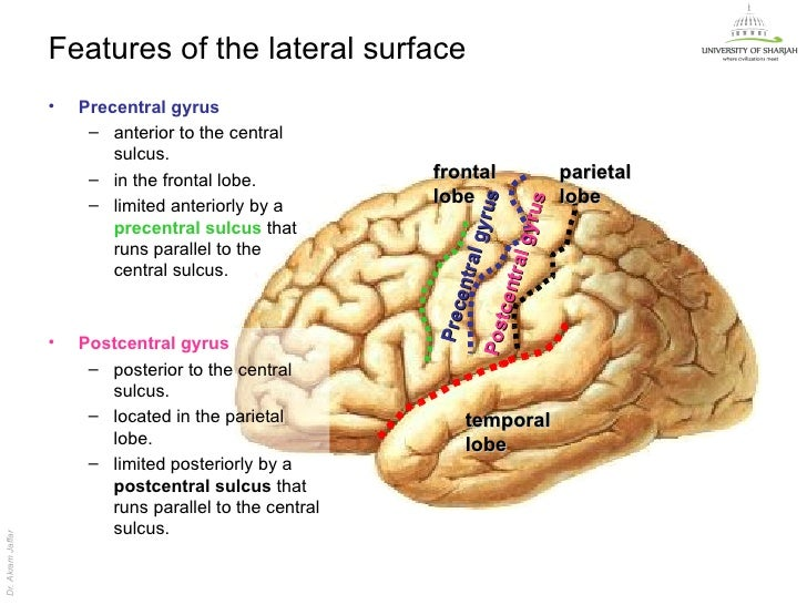 Human Brain Facts Functions amp Anatomy  Live Science