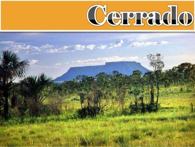  Segunda maior formação vegetal brasileira; MG, MT, BA, MS, TO e GO;  197 milhões de hectares;  Áreas de transição.