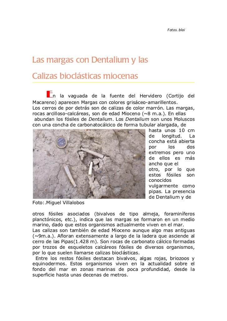 Fotos. blaiLas margas con Dentalium y lasCalizas bioclásticas miocenas     En      la vaguada de la fuente del Hervidero (...