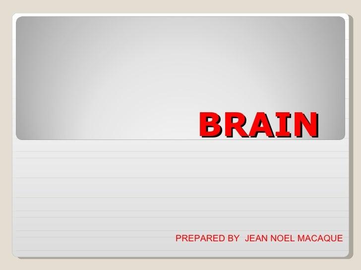 BRAIN PREPARED BY  JEAN NOEL MACAQUE