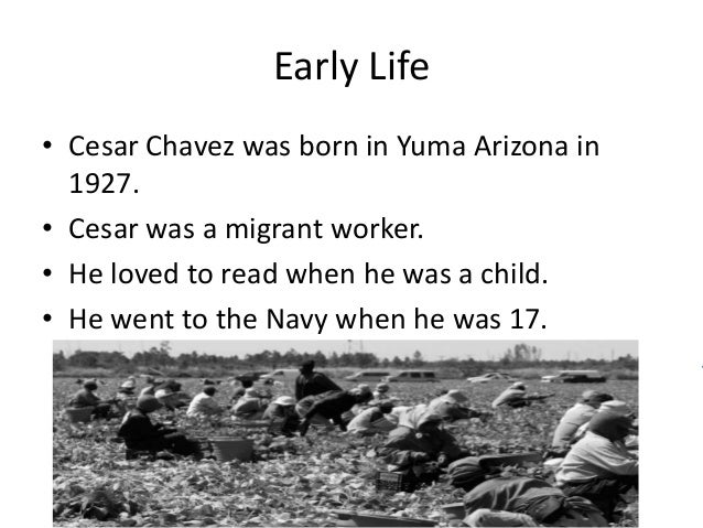 the life and contributions of cesar chavez for the farm workers Cesar chavez was an american labor leader and civil rights activist  because  he did not want his mother to have to work in the fields chavez dropped out to  become a full-time migrant farm worker.