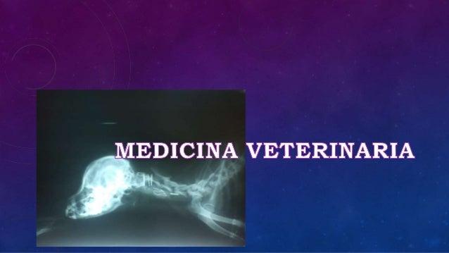 veterina@udca.edu.co -mleal@udca.edu.co