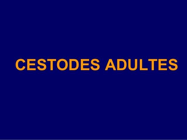 CESTODES ADULTES