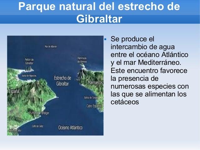 Parque natural del estrecho de Gibraltar  Se produce el intercambio de agua entre el océano Atlántico y el mar Mediterrán...