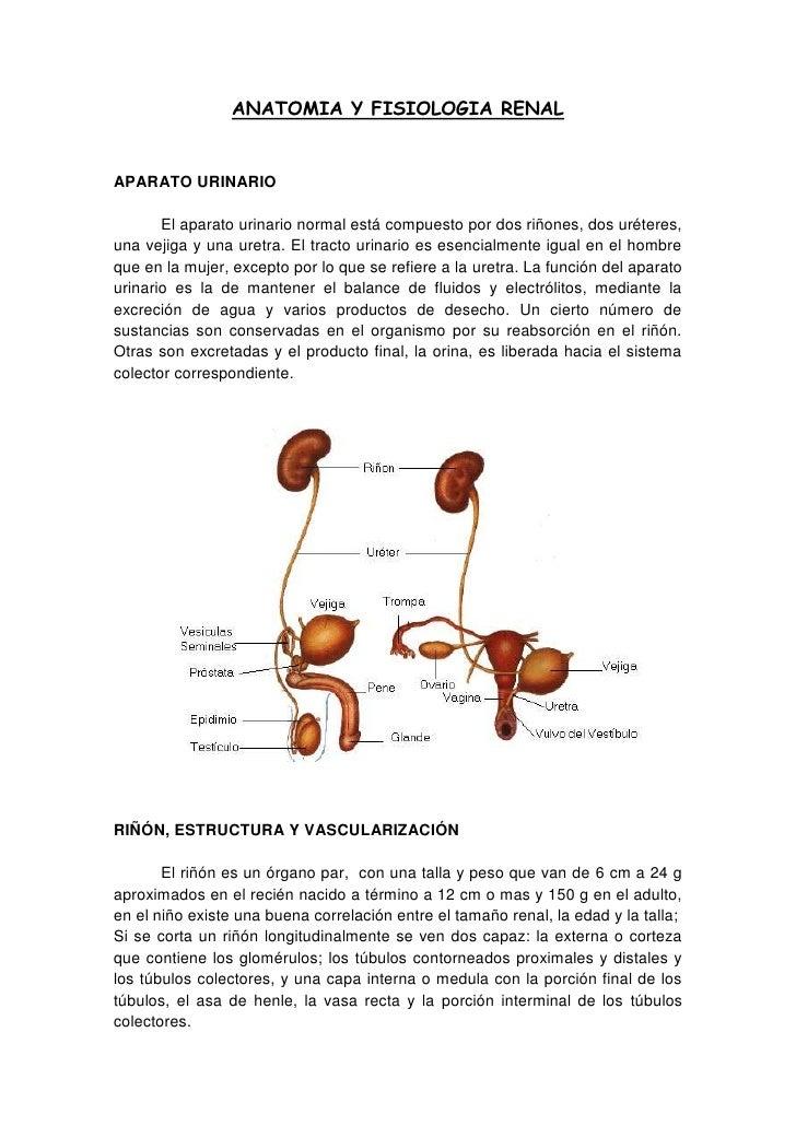 ANATOMIA Y FISIOLOGIA RENAL<br />APARATO URINARIO<br />El aparato urinario normal está compuesto por dos riñones, dos urét...
