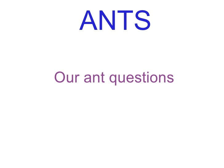ANTS Our ant questions