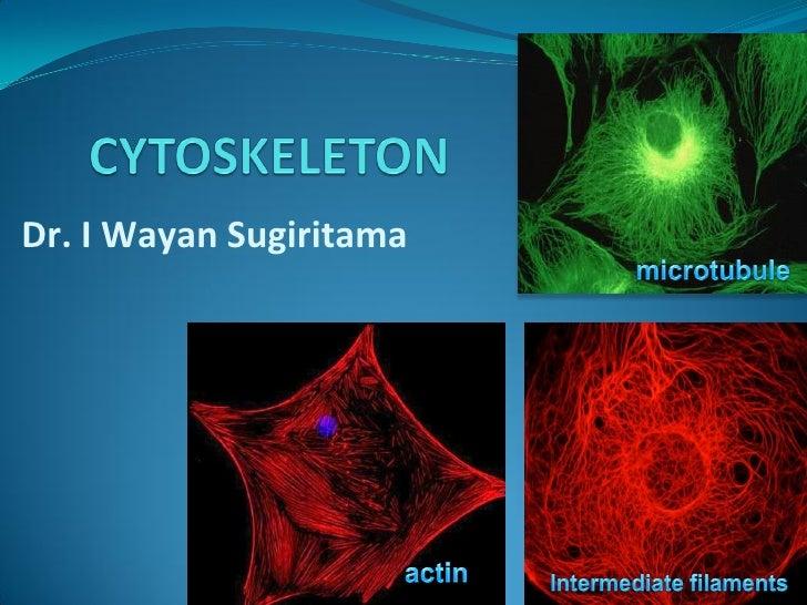 Dr. I Wayan Sugiritama