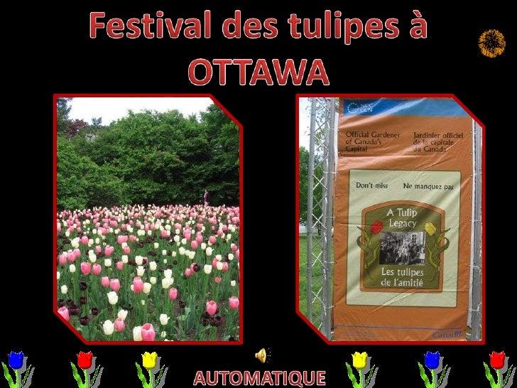 La tulipe est l'emblème floral de la ville d'Ottawa