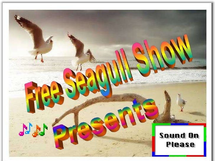 Free Seagull Show<br />Presents<br />