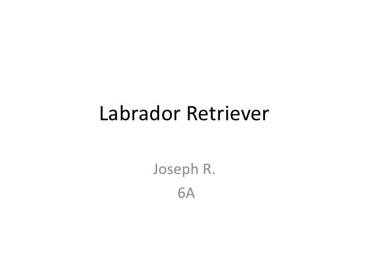 Labrador Retriever<br />Joseph R.<br />6A<br />